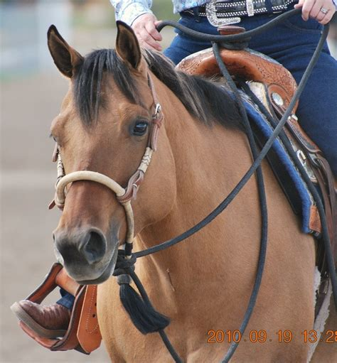 horse bosal training western bridle hackamore horses riding bit paint racing barrel bitless hackamores tack whatever noseband actually re they