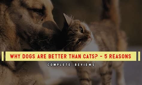 cats dogs better than why reasons cat dog