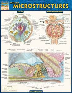 102 Best Medical Images On Pinterest
