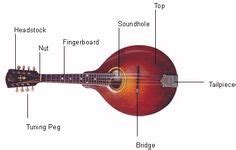 Diagram Violin With Labeled Parts Luthier