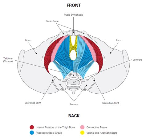 Pelvic Floor by The Muscles A In Balance Pilates Studio