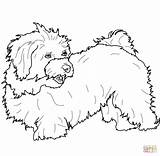 Coloring Pages Bichon Havanese Poodle Printable Frise Toy Cartoon Dogs Animals Result Categories sketch template