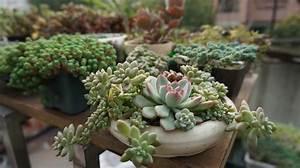 Plante Succulente Espèces Représentatives : au fait qu 39 est ce qu 39 une plante succulente soci t ~ Nature-et-papiers.com Idées de Décoration