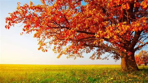 Fall Backgrounds Free by 40 Autumn Wallpaper Backgrounds For Free Hd