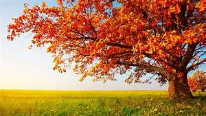 Download Wallpaper 1920x1080 Red tree leaves in autumn on ...