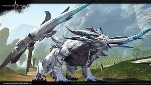 Dragon39s Proophet Alle Infos Zum Drachen MMO