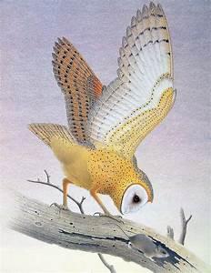 Vintage Barn Owl Illustration