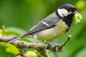 Kleine Vögel Im Garten : vogel im garten bewegt sich nicht m bel und heimat ~ Lizthompson.info Haus und Dekorationen