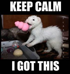 35 best Ferrets images on Pinterest | Cute ferrets, Pets ...