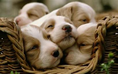 Puppy Wallpapers Happy Those Sleeping Mood Let
