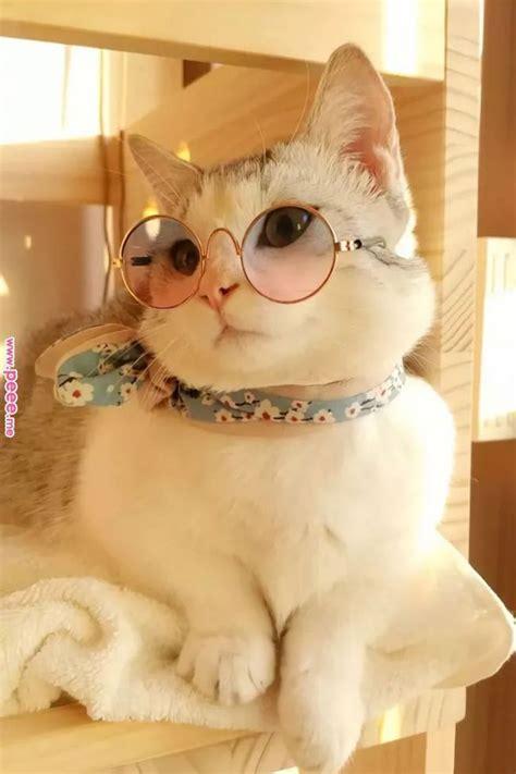 fancy cat dressed   scarf  glasses fashioncat cat fluffy cute baby animals cute