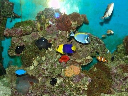 poemes de robert casanova l ex aquarium de seb
