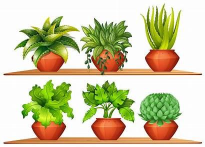 Types Plants Different Pots Plant Clipart Vector