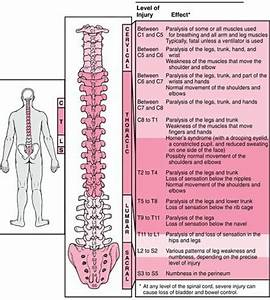 Effects Of Spinal Injury