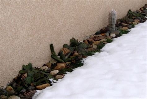 Bienfaits Du Cactus Dans Une Maison by Culture Des Cactus Plantes Grasses Et Succulentes