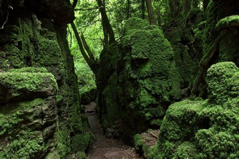 Puzzlewood Attraction In Or Near Coleford In The Wye