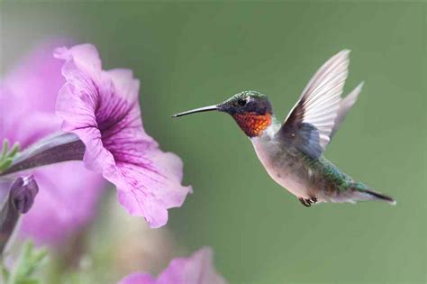 hummingbird flowers from flower to flower into freedom exploring the depth of living