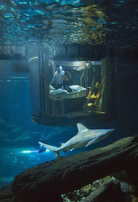 Paris Aquarium's Underwater Bedroom