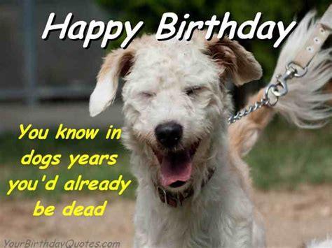 Birthday Dog Meme - 41 best funny birthday wishes for birthday boy girl aunt dad mom