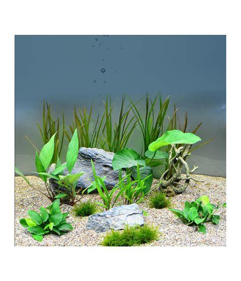 aquarium pflanzen düngen planet plants chichlide 120er set aquarium pflanzen dehner