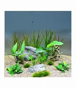 Pflanzen Für Aquarium : planet plants chichlide 120er set aquarium pflanzen dehner ~ Buech-reservation.com Haus und Dekorationen