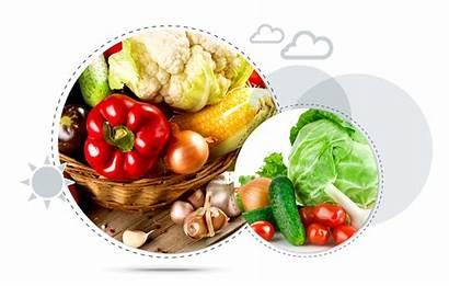 Fresh Vegetables Vegetable Taze Sebze Frozen Everyone