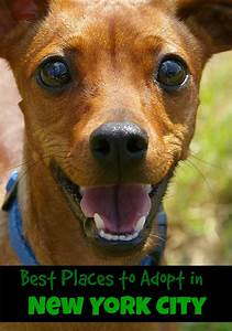 best places to adopt in new york city With adopting a new dog