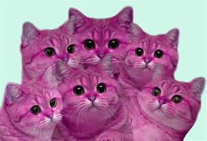 pink cats pink cats on