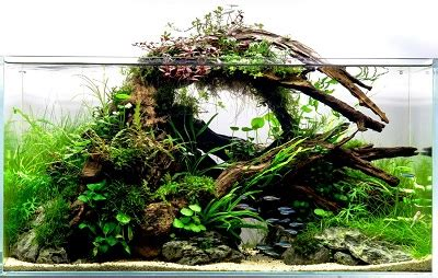 Aquascape Wood by Aquarium Wood A Complete Guide To Preparing And