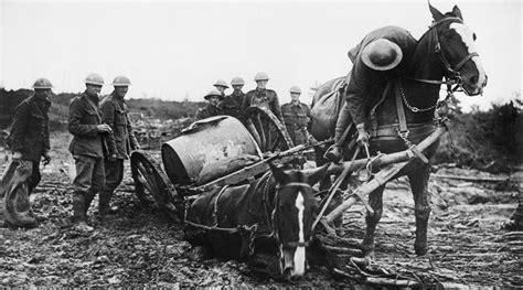 ww1 war campaign horsetalk nz victims horses