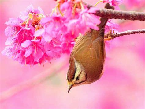 beautiful nice  lovely birds images allfreshwallpaper