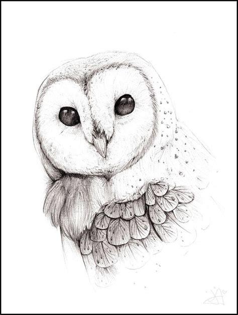barn owl face drawing  getdrawings