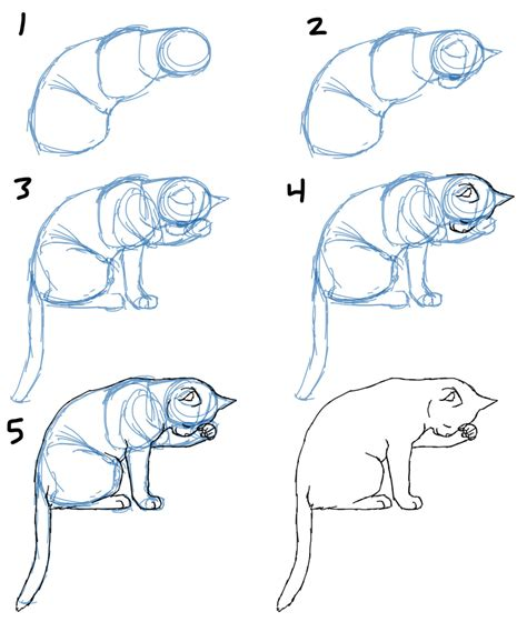 savanna williams   draw cat bodies  poses