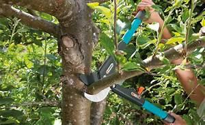 Wann Apfelbaum Pflanzen : baum schneiden baumschnitt ~ Lizthompson.info Haus und Dekorationen