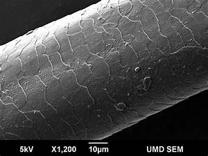 human hair microscope - Google Search | Subtle Change ...