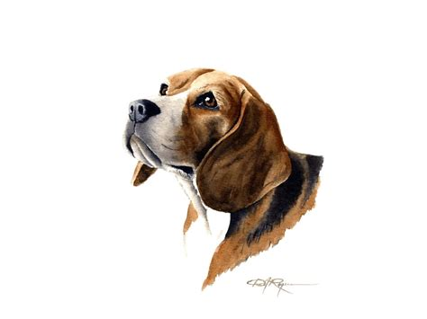 beagle dog wallpaper gallery