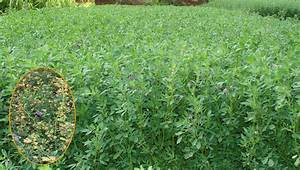 Crop Production::Forage Crops::Kudirai Masal