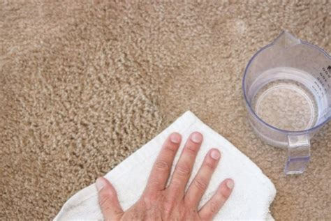 How To Remove Carpet Stains With Liquids Carpet Cleaners Hampton Roads Live Red Grammys 2018 Certified Care Sherwood Park Santa Monica Bills Rochester Ny How To Get Rid Of Beetles On Bed Fix Burnt From Hair Dryer Best Cleaning Companies In