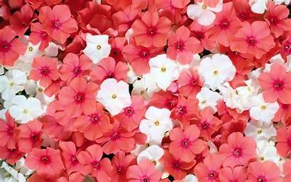 Pink Flowers Flower Bright