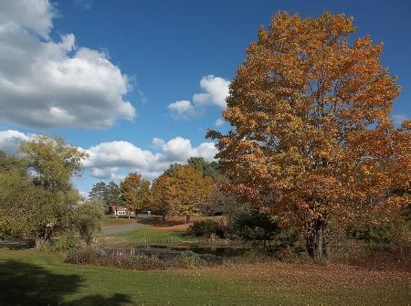 Maine Fall Nature Backgrounds