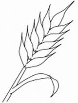 Coloring Pages Autumn Wheat Colouring Coloringpagebook Printable Başak Crafts Crops sketch template