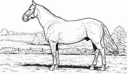 Coloring Horse Horses Meadow Pages Colornimbus
