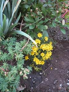 Was Blüht Jetzt Im Garten : hier fehlt was bl hendes edit jetzt bl ht 39 s mein ~ Lizthompson.info Haus und Dekorationen