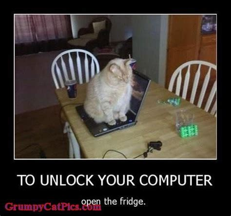 Dog On Computer Meme - 9 best images about computer cats on pinterest cats search and cat memes