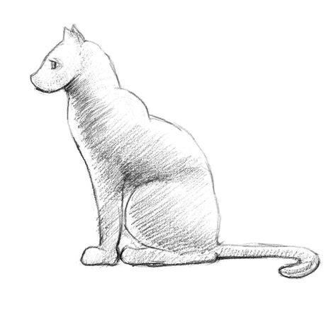 draw  cat step  step