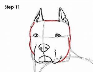 Drawn pit bull head - Pencil and in color drawn pit bull head
