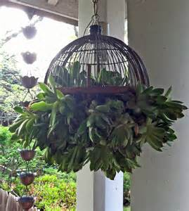 hanging succulent plant for the outdoor garden patio balcony wherever you like
