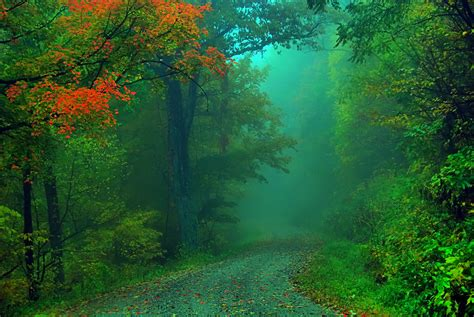 foggy fall road   point  life  worlds beauty