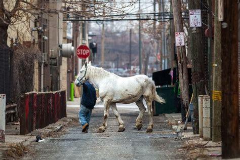 philadelphia carriage  closes  numerous violations