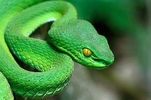 Free viper snake Images, Pictures, and Royalty-Free Stock ...